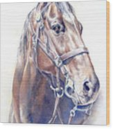 Regal  A Cavalry Horse Portrait Wood Print