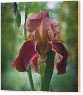 Regal Iris Wood Print