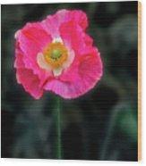 Regal Looking Poppy. Wood Print