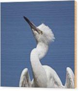 Regal Snowy Egret Wood Print