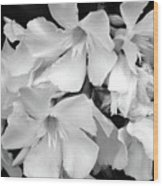 Regal Splendor Wood Print