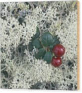 Reindeer Lichen And Low-bush Cranberry Wood Print