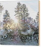 Reindeer On Autumn Sun Wood Print