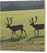 Reindeers On Swedish Fjeld Wood Print