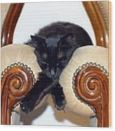 Relaxed Black Cat Sleeping Between Two Chairs Wood Print