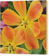 Relaxed Tulips Wood Print