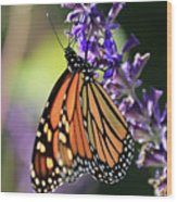 Relaxing Monarch Butterfly Wood Print