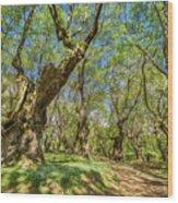 Relaxing Planes Trees Arbor Wood Print