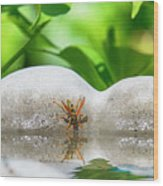 Reflected Little Stinger Taking A Sip 2 By Chris White Wood Print