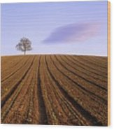 Remote Tree In A Ploughed Field Wood Print