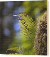 Renewal Ferns Wood Print by Mike Reid