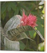 Reptile Garden II Wood Print