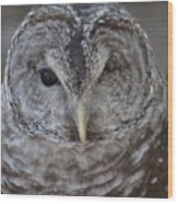 Rescue Owl Wood Print