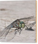 Rescued Dragonfly Wood Print
