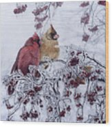 Resilient Reds - Northern Cardinals Wood Print
