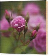 Resplendent Roses Wood Print
