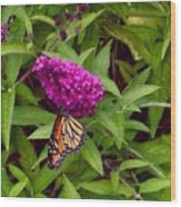 Resting Butterfly 1 Wood Print