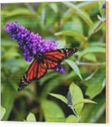 Resting Butterfly 2 Wood Print