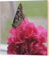 Resting Butterfly Wood Print by Myrna Migala