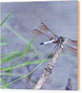 Resting Dragonfly Wood Print