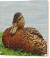 Resting Duck Wood Print