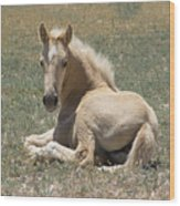 Resting Filly Wood Print by Nicole Markmann Nelson