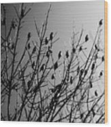 Resting Flock Bw Wood Print