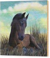 Resting Foal Wood Print
