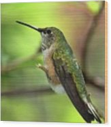 Resting Hummingbird Wood Print