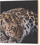 Resting Leopard  Wood Print