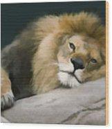 Resting Lion Wood Print