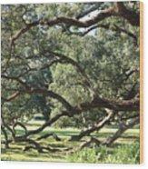 Resting Live Oaks Wood Print