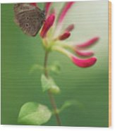 Resting On The Pink Plant Wood Print