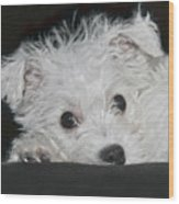 Resting Puppy Wood Print