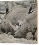 Resting Rhinos Wood Print
