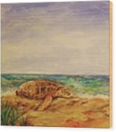 Resting Sea Turtle Wood Print
