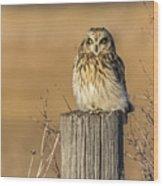 Resting Short Eared Owl Wood Print