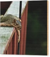 Resting Squirrel Wood Print