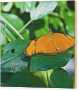 Resting--tropical Butterfly Wood Print
