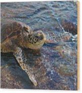 Resting Turtle Wood Print