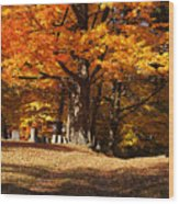 Resting Under Maples Wood Print