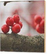Resting Winter Berries  Wood Print
