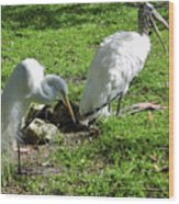 Resting Wood Stork And White Egret Wood Print