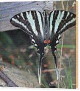 Resting Zebra Swallowtail Butterfly Wood Print