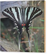 Resting Zebra Swallowtail Butterfly Square Wood Print