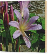 Resurrection Flower Wood Print