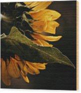 Reticent Sunflower Wood Print