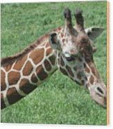 Reticulated Giraffe #3 Wood Print