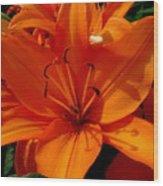 Retreating Orange Lilies Wood Print