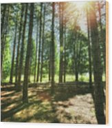 Retzer Nature Center Pine Trees Wood Print